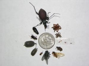 Harmless bugs