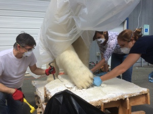 Aaron Elmore, Fran Ritchie, and Jackie Manning free a polar bear from a 1970s era exhibit mount